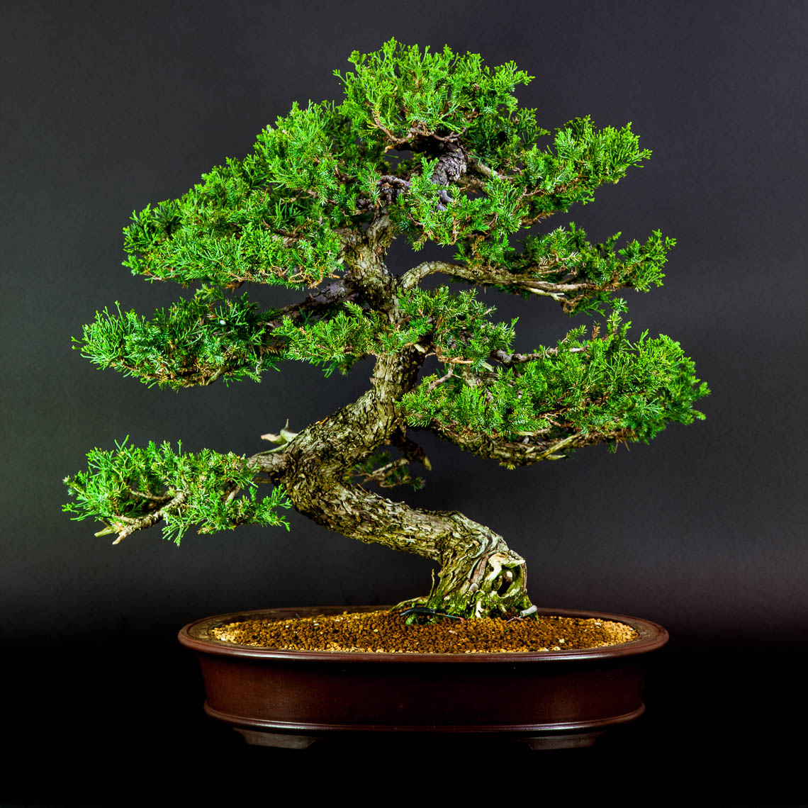 20160501_Bonsai-62-edit