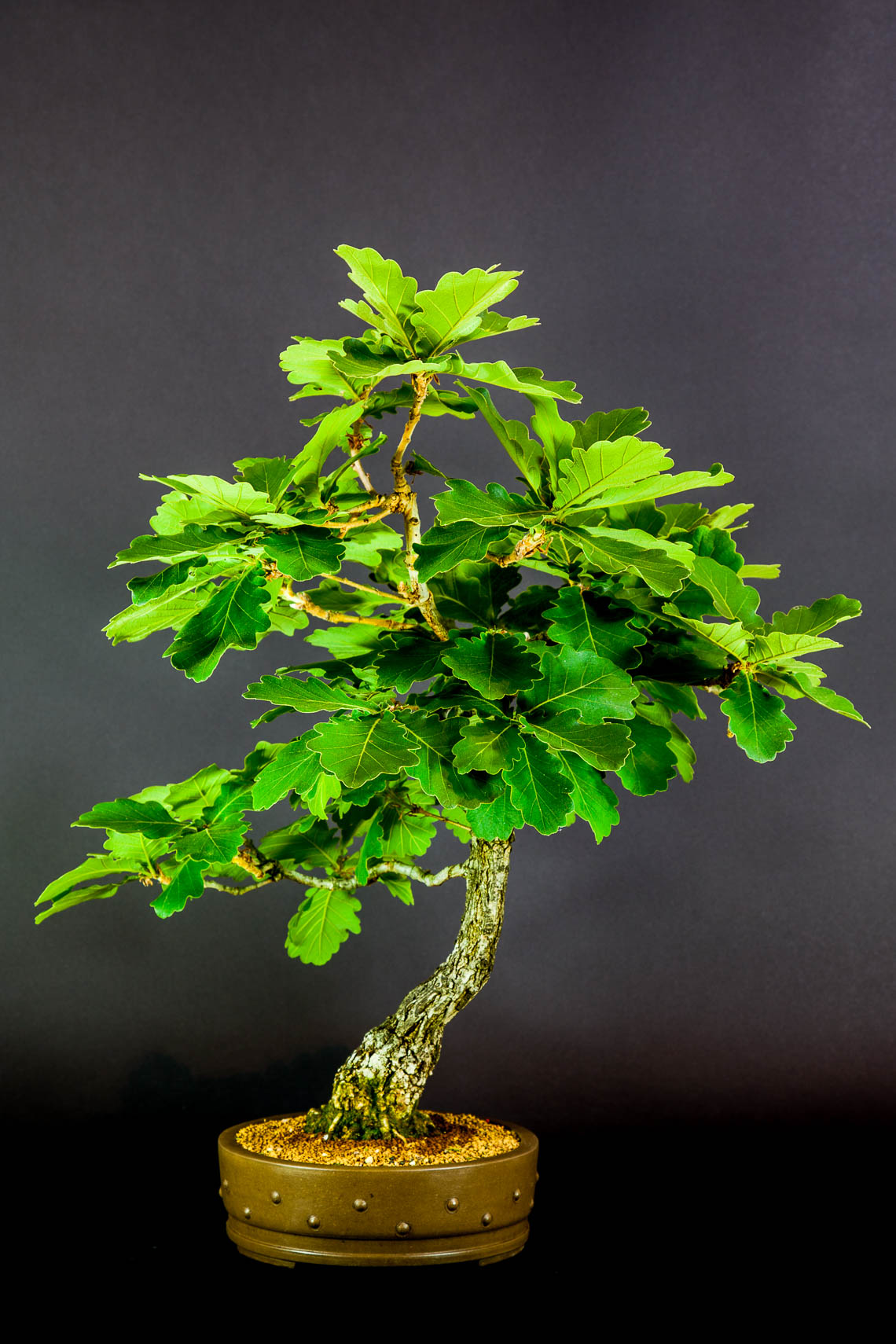 20160501_Bonsai-7-edit
