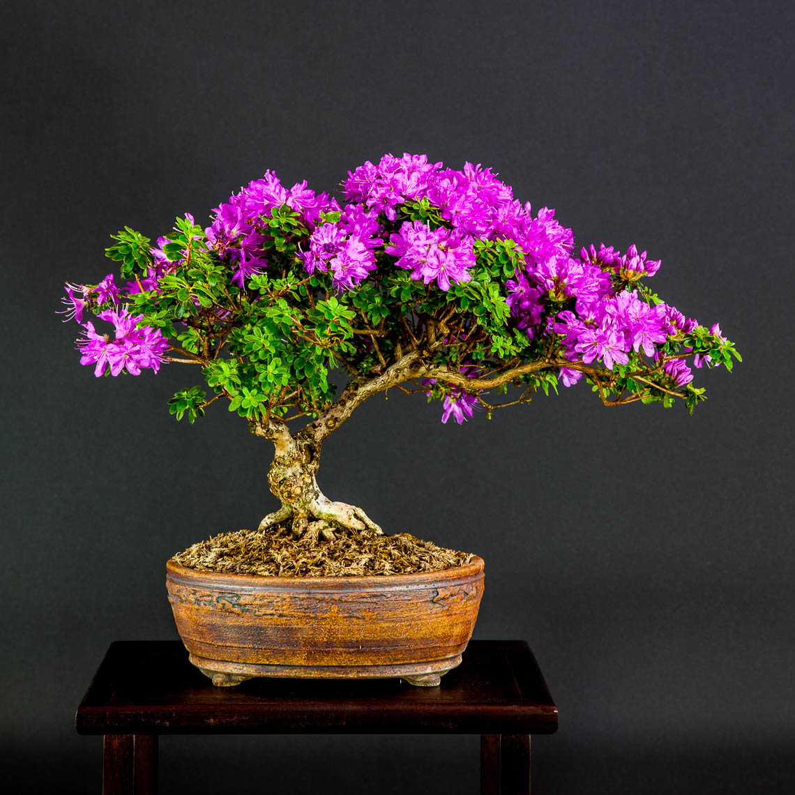 20160501_Bonsai-76-edit