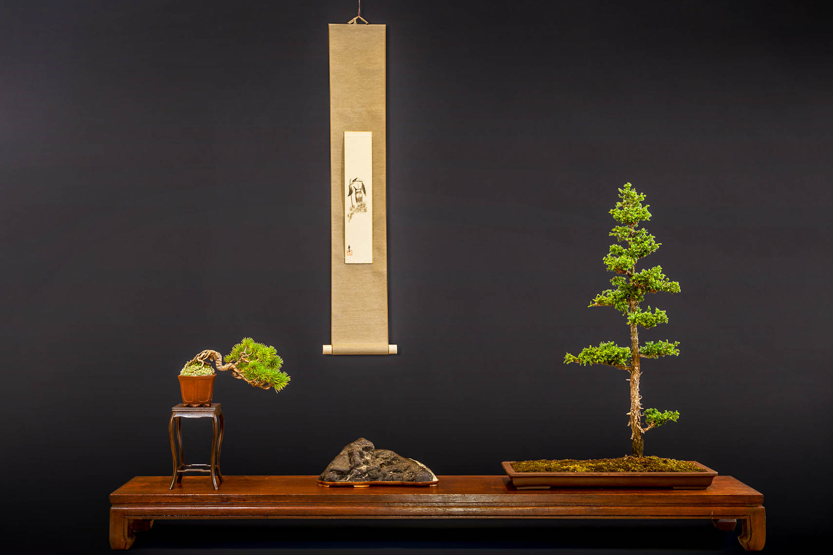 20170625_Bonsai-159-edit