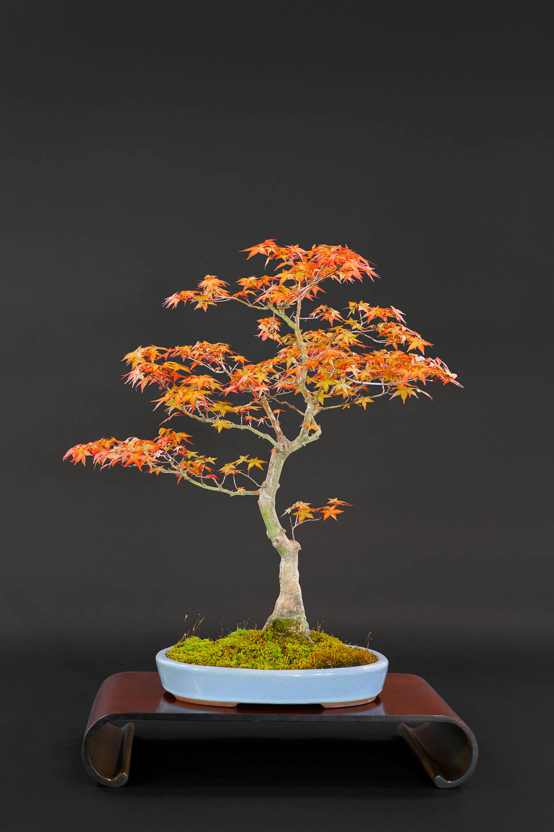 20180422_Bonsai-127-edit
