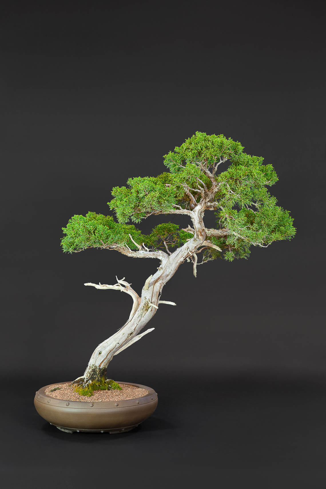 20180422_Bonsai-37-edit