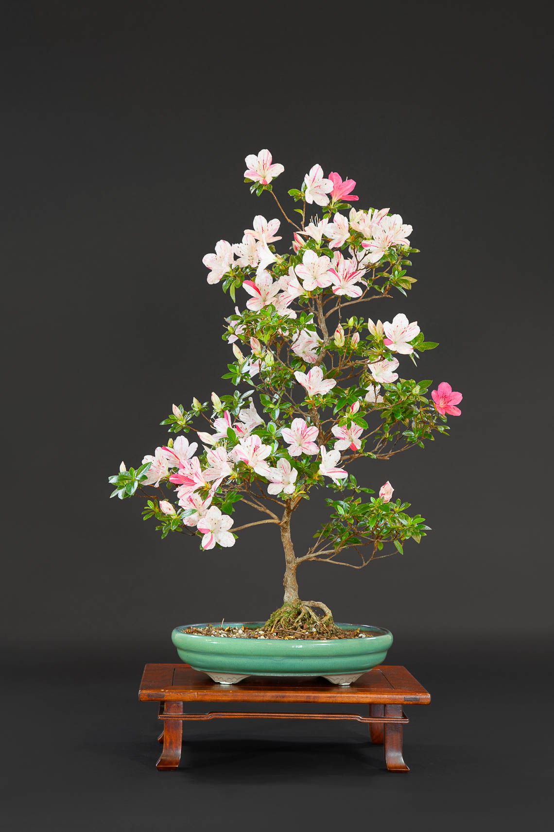 20180422_Bonsai-70-edit